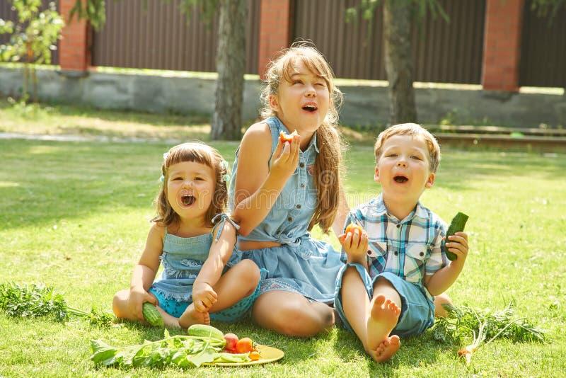 Crianças fora no verão irmão e irmã que comem vegetais imagem de stock