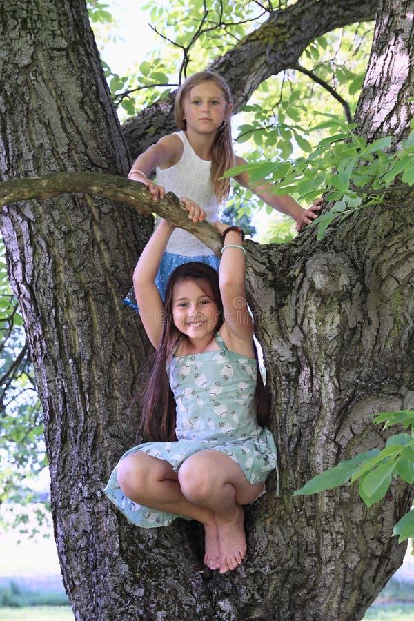 Crianças - meninas que estão na árvore fotos de stock