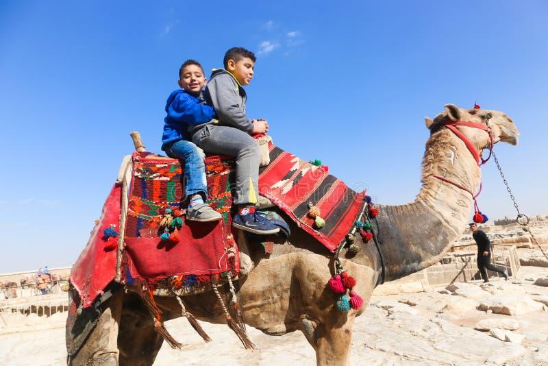 Crianças no camelo em pirâmides de Giza foto de stock