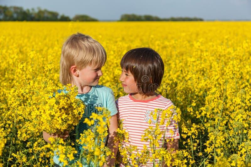 Crianças no campo com o amarelo de florescência foto de stock