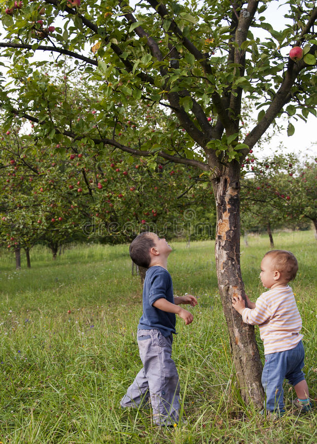Crianças no pomar de maçã fotos de stock royalty free