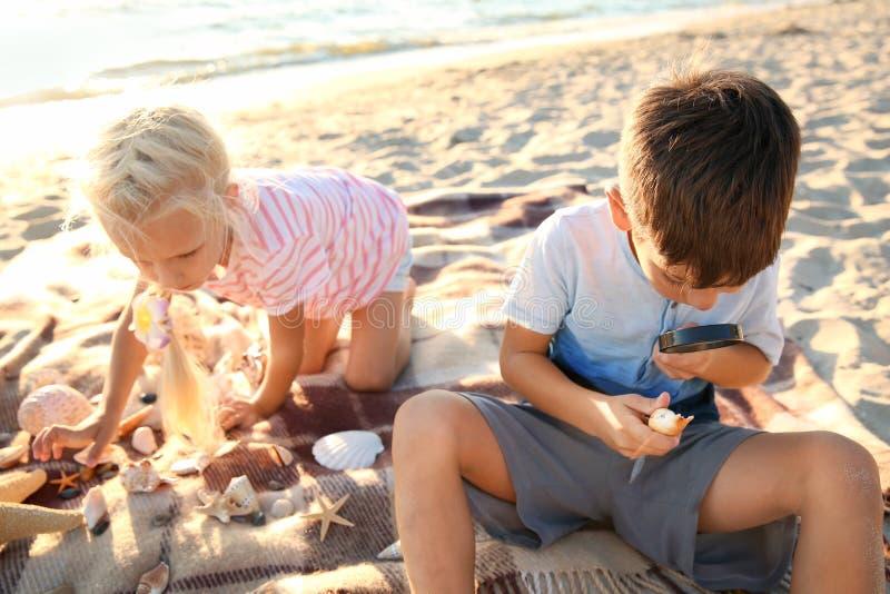 Crianças pequenas bonitos que jogam com escudos do mar na praia imagem de stock