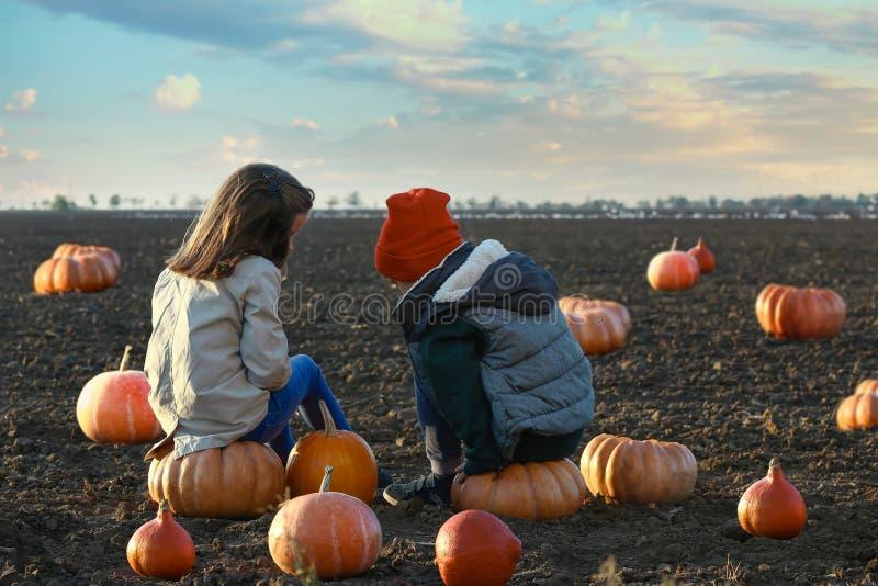 Crianças pequenas bonitos que sentam-se em abóboras no campo do outono imagem de stock royalty free