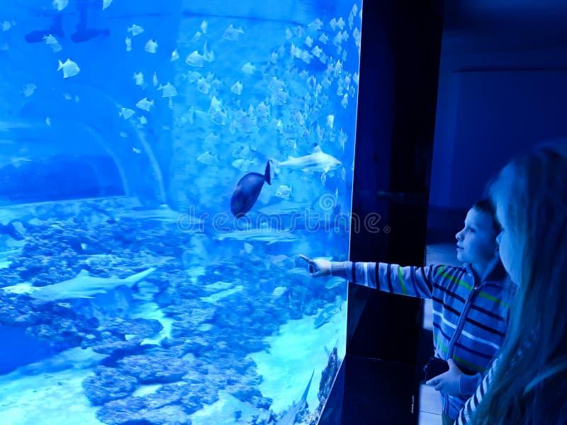 Crianças que admiram o grande aquário com tubarões e os peixes exóticos imagens de stock