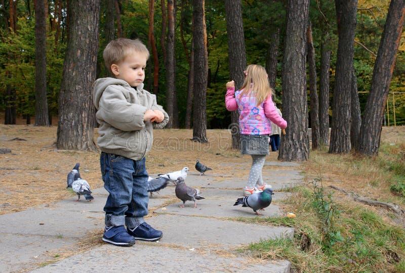Crianças que alimentam pássaros imagens de stock royalty free