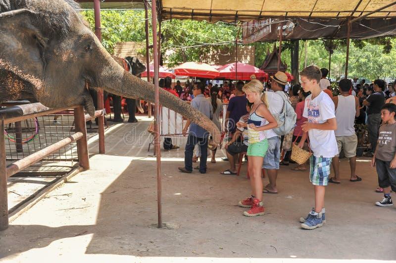 Crianças que alimentam um elefante imagens de stock