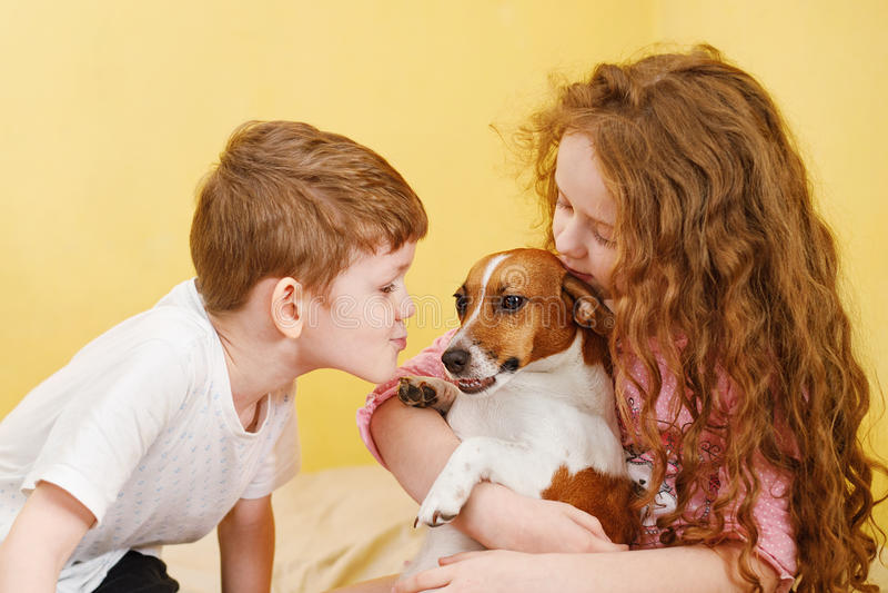 Crianças que beijam um cão de russell do jaque do cachorrinho imagem de stock