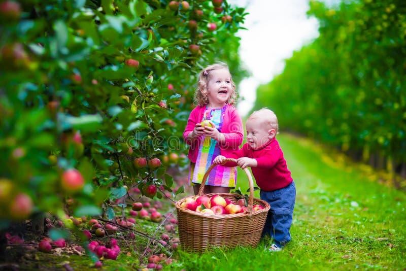 Crianças que escolhem a maçã fresca em uma exploração agrícola foto de stock royalty free
