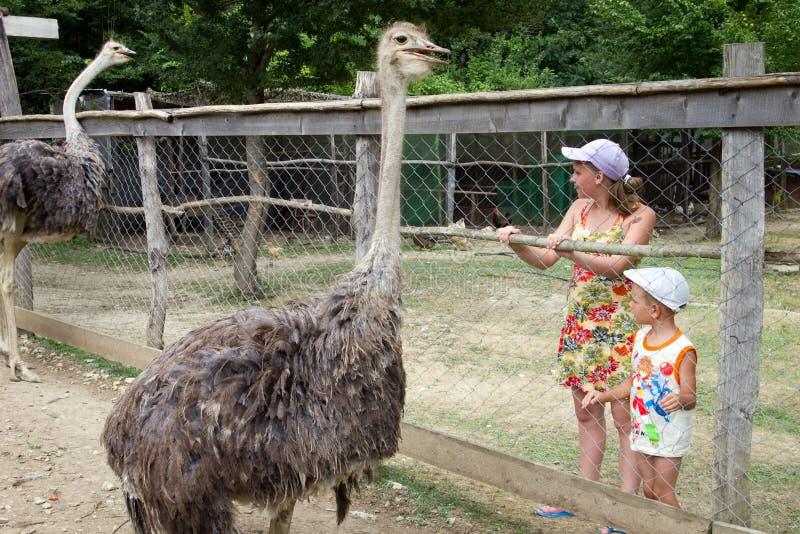 Crianças que estão no aviário com avestruzes imagem de stock