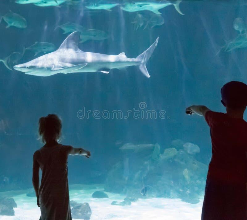 Crianças que olham tubarões foto de stock