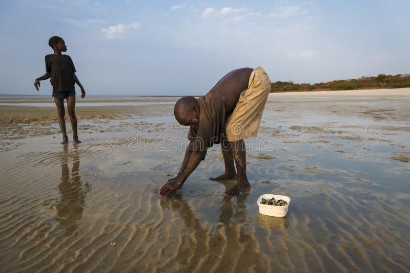 Crianças que recolhem berbigões na praia na ilha de Orango no por do sol imagem de stock royalty free