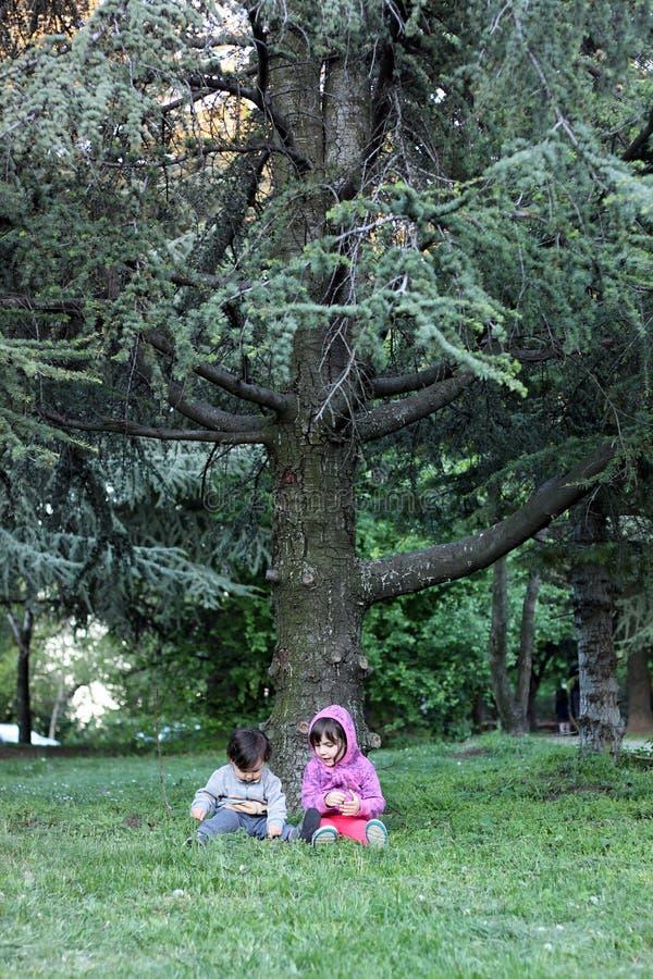 Crianças sob o pinheiro fotografia de stock royalty free