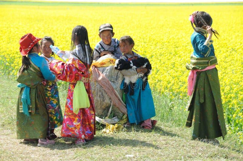 Crianças tibetanas no campo do rapeseed fotos de stock