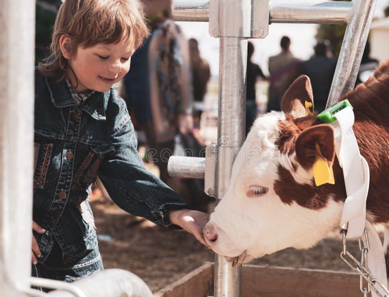 A crian?a alimenta a vitela marrom imagens de stock