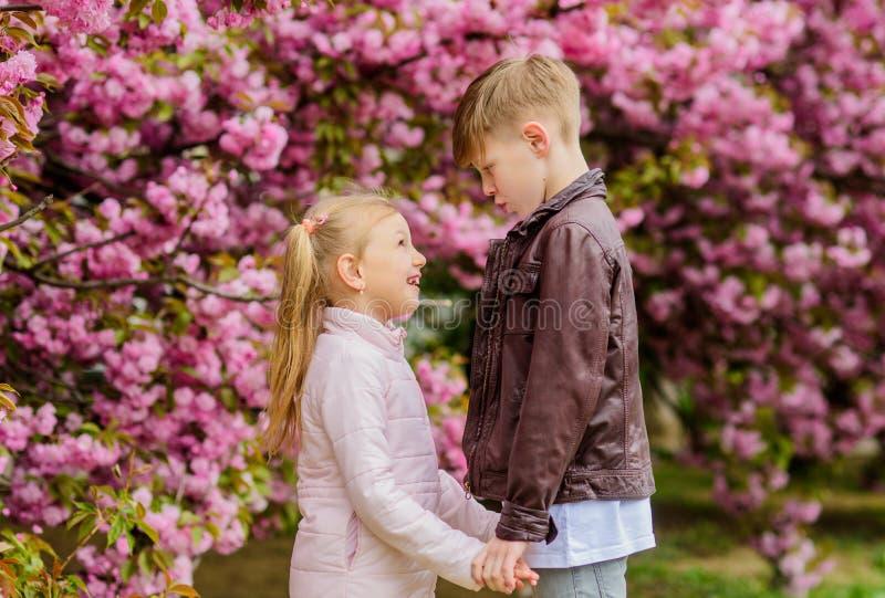 Crian?as na flor de cerejeira cor-de-rosa do amor O amor est? no ar Acople crian?as bonitas ador?veis andam o jardim de sakura Am foto de stock