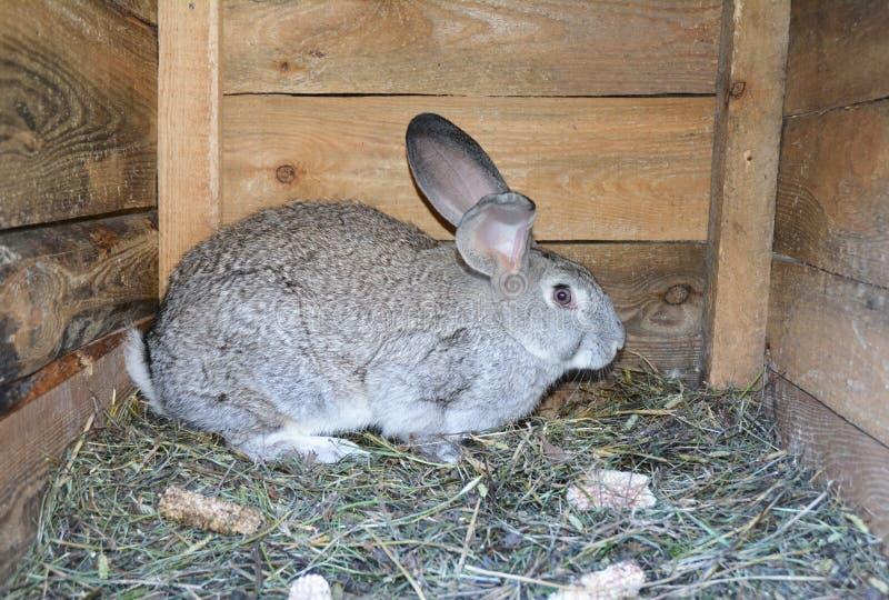 Criando conejos en casa en jaula de madera del conejo fotos de archivo