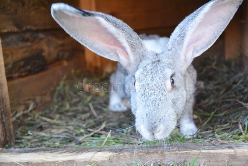 Criando conejos en casa en jaula del conejo fotos de archivo libres de regalías