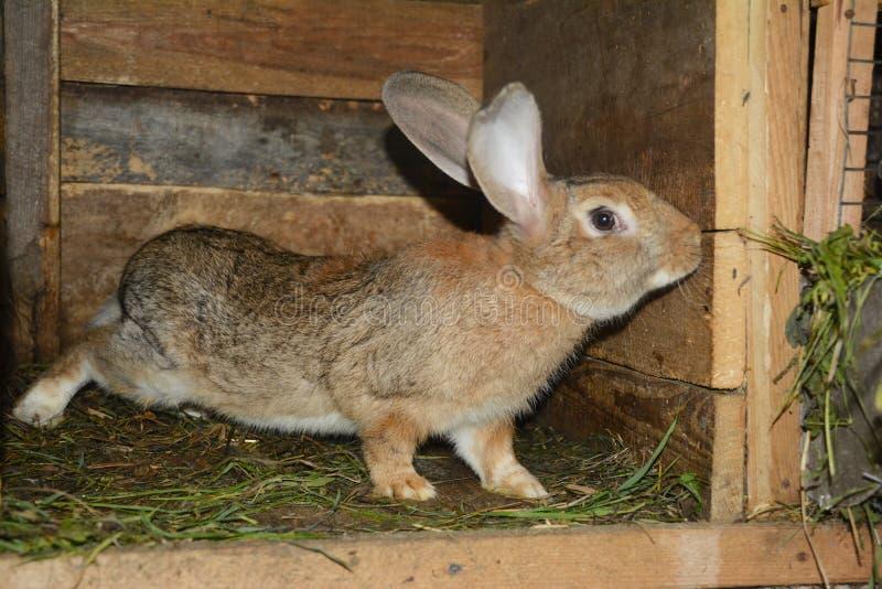Criando y criando conejos en la granja fotos de archivo