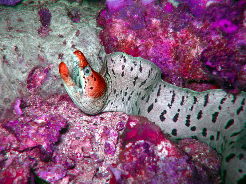 Criatura colorida foto de stock