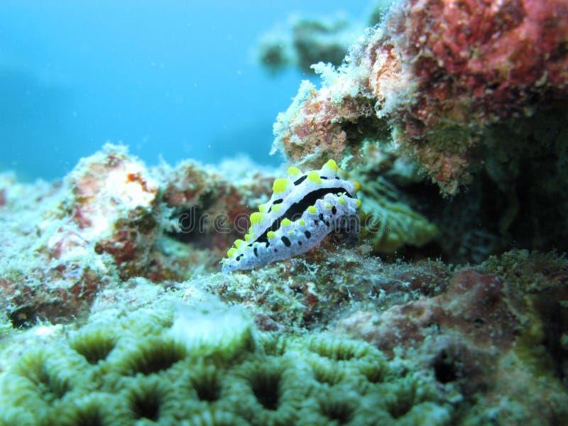 Criatura do mar e recife coral fotos de stock royalty free