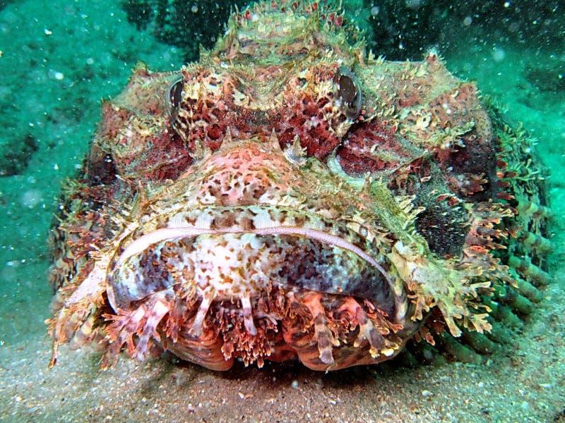 Criatura do mar profundo fotos de stock royalty free