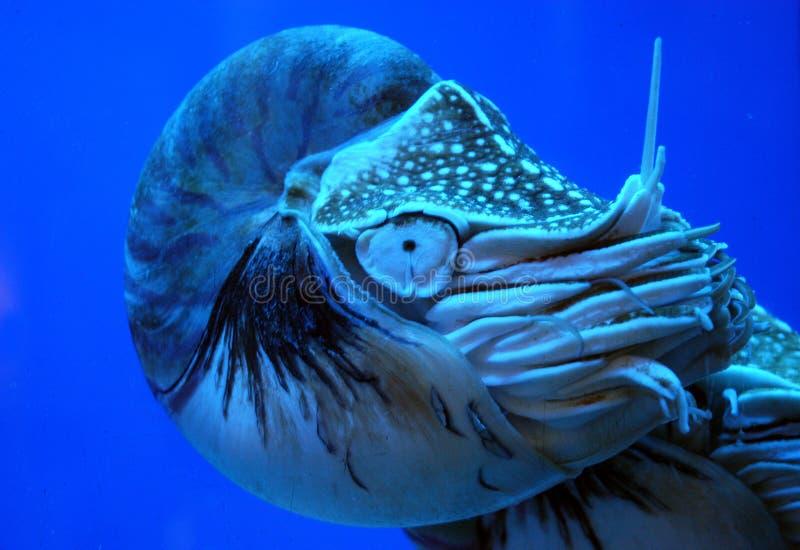 Criatura do oceano imagens de stock royalty free