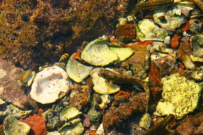Criatura Marine Life Coral Background do mar dos anfíbios imagem de stock royalty free