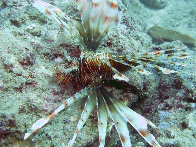 Criatura marinha imagem de stock