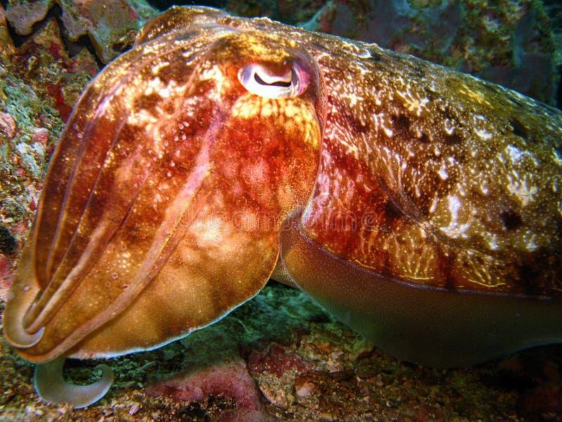 Criatura marinha incomun fotos de stock