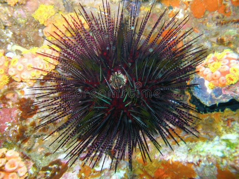 Criatura marinha Spiky imagem de stock royalty free