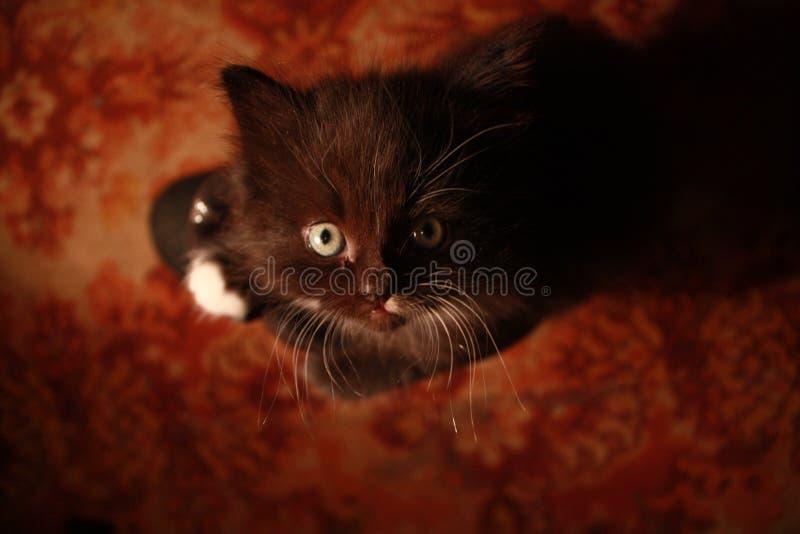 Criatura peluda encantadora foto de archivo