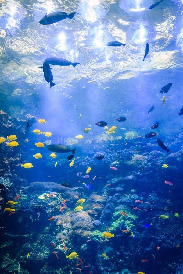 Criaturas del mar en el acuario los E.E.U.U. de Georgia con los buceadores en el tanque imagen de archivo libre de regalías