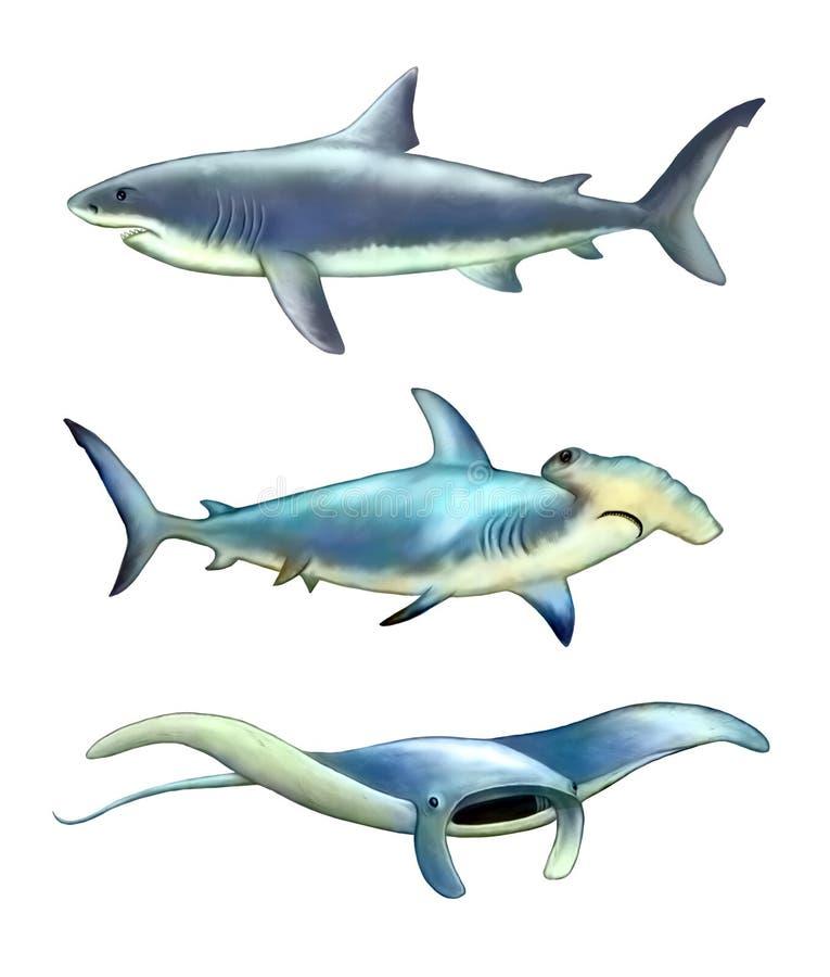 Criaturas do mar