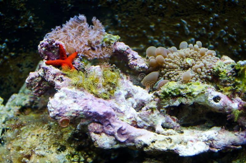 Criaturas do mar em um aquário da água salgada fotografia de stock royalty free