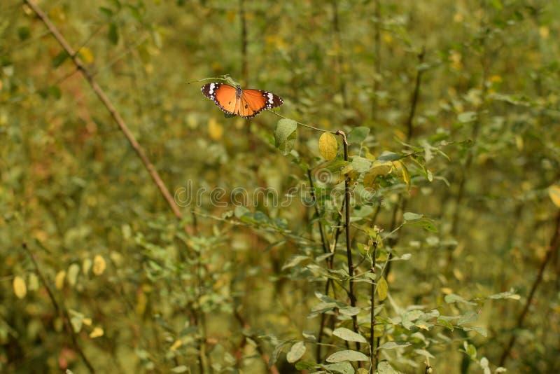 Criaturas maravillosas de la mariposa de la naturaleza imágenes de archivo libres de regalías