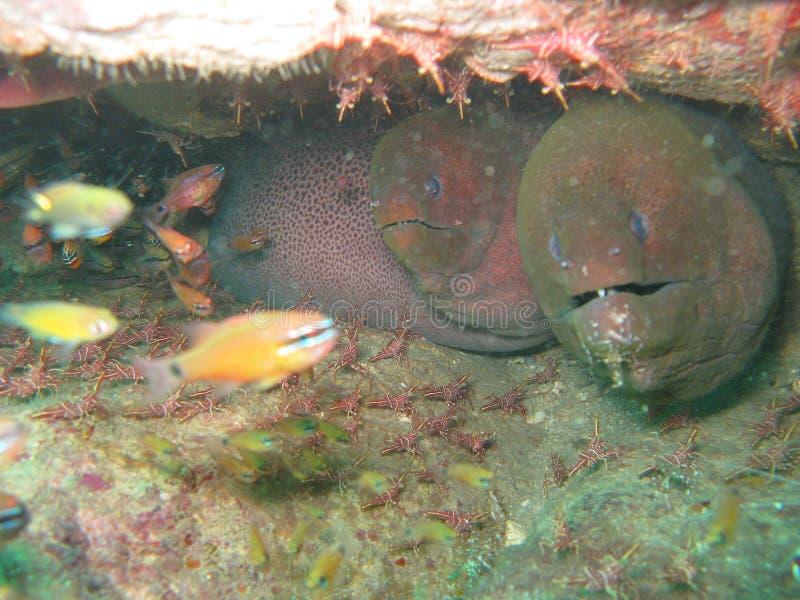 Criaturas marinhas imagem de stock royalty free