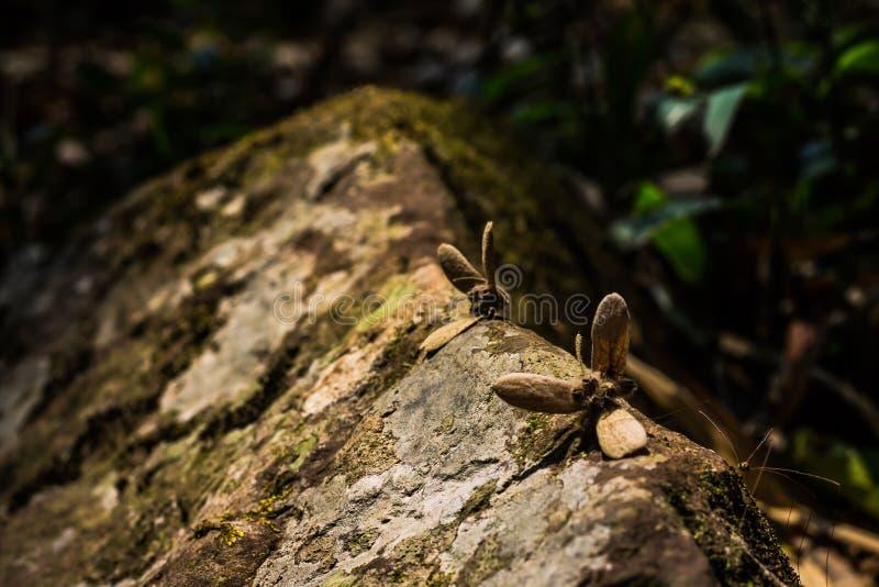 Criaturas profundas da floresta imagens de stock royalty free