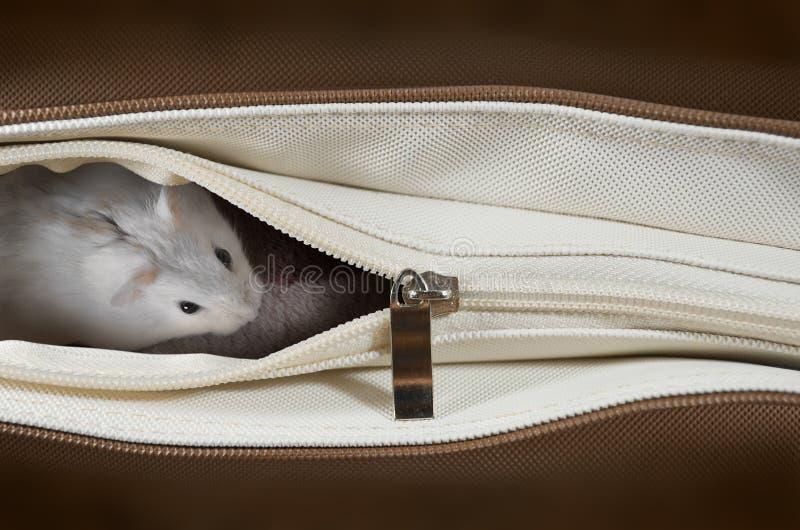 Download Criceto in una borsa fotografia stock. Immagine di animale - 30828322