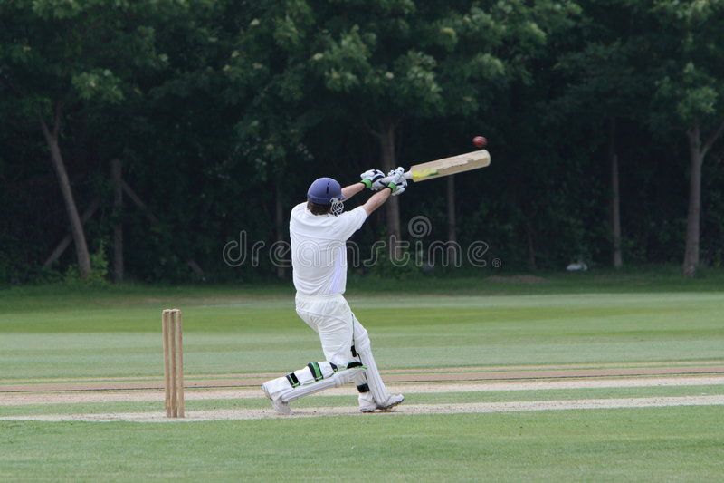 Cricket photo stock