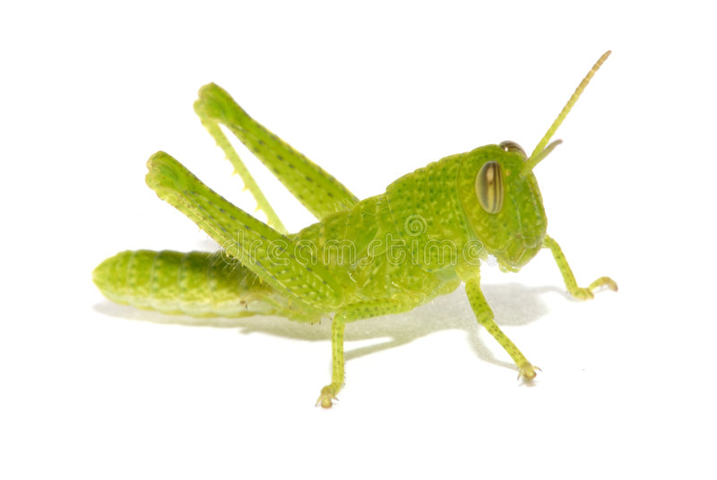 Cricket images stock