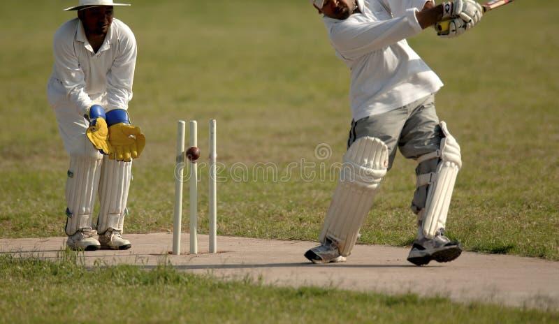 cricket anglików mecz fotografia royalty free