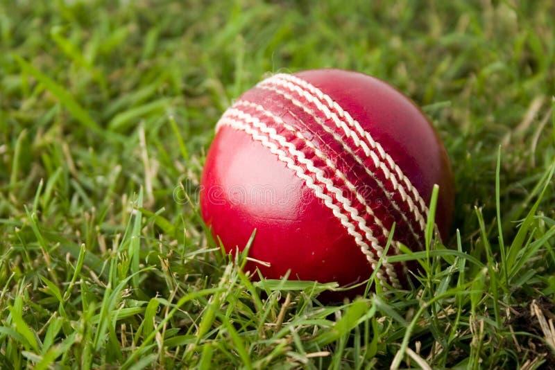 Cricket ball on grass royalty free stock photo