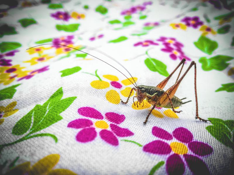 Cricket on a colorful picnic blanket. royalty free stock photography