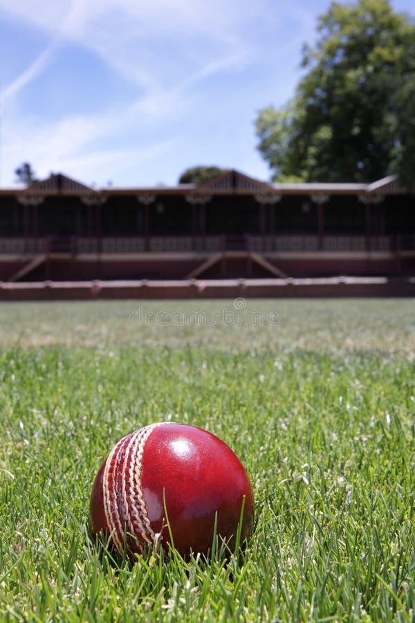 cricket de bille image libre de droits