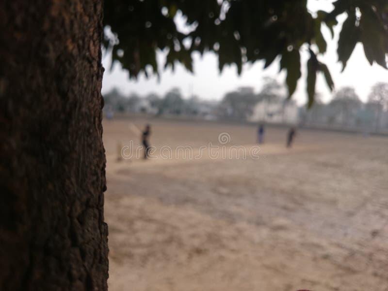 Cricket de rue images libres de droits