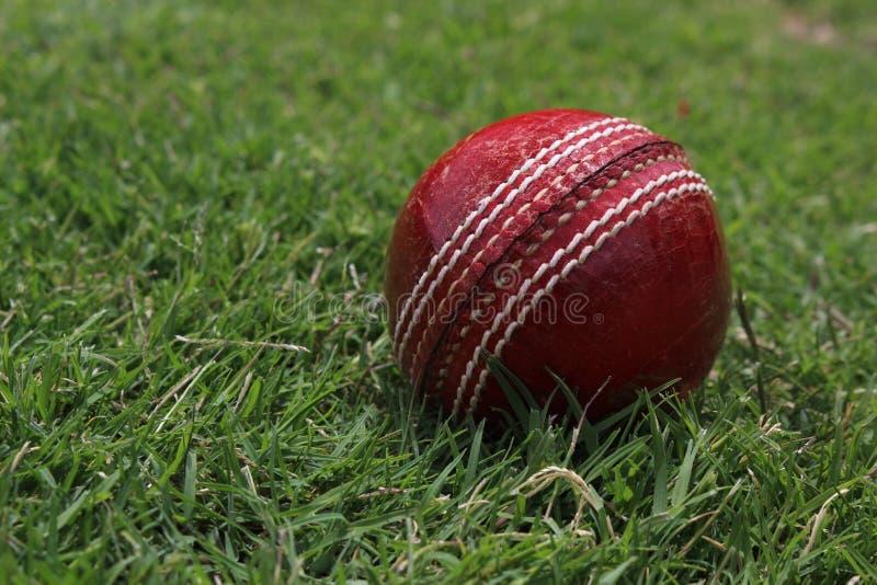 cricket floodlit στοκ φωτογραφίες με δικαίωμα ελεύθερης χρήσης