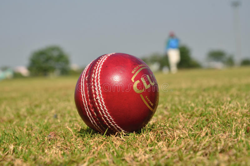 cricket floodlit 库存图片