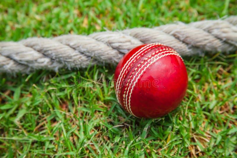 Cricket Floodlit image libre de droits