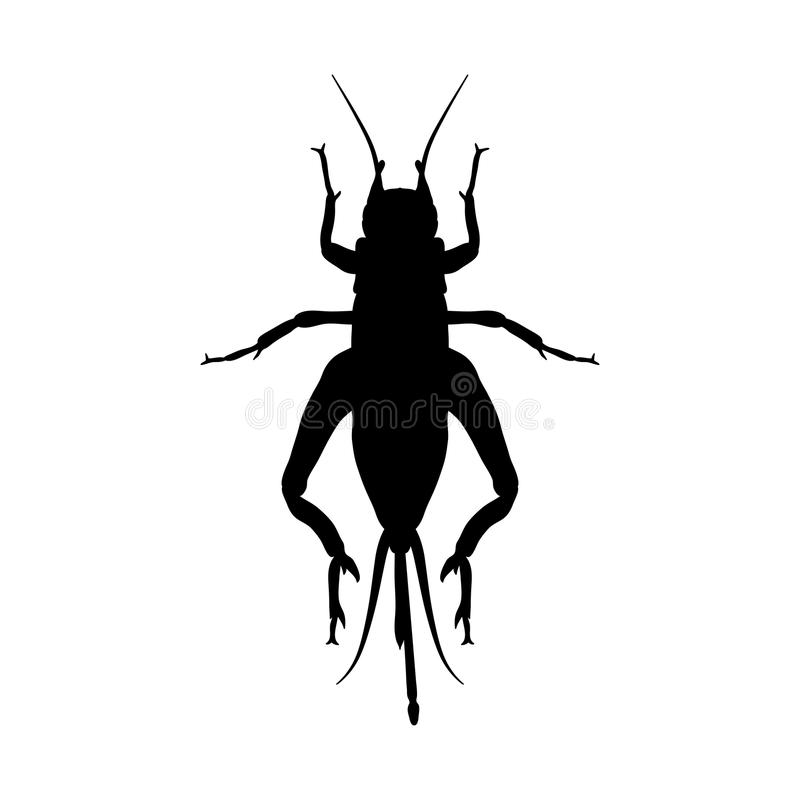 Cricket. grig. Gryllus campestris. Sketch of. Cricket. cricket isolated on white background. cricket Design for coloring book. hand-drawn cricket. Vector royalty free illustration