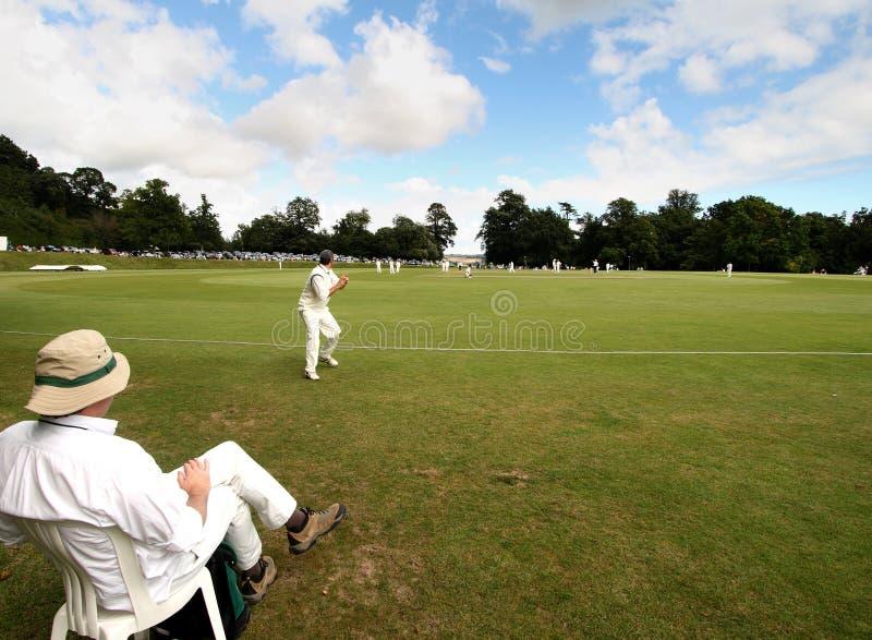 Cricket inglese immagini stock libere da diritti